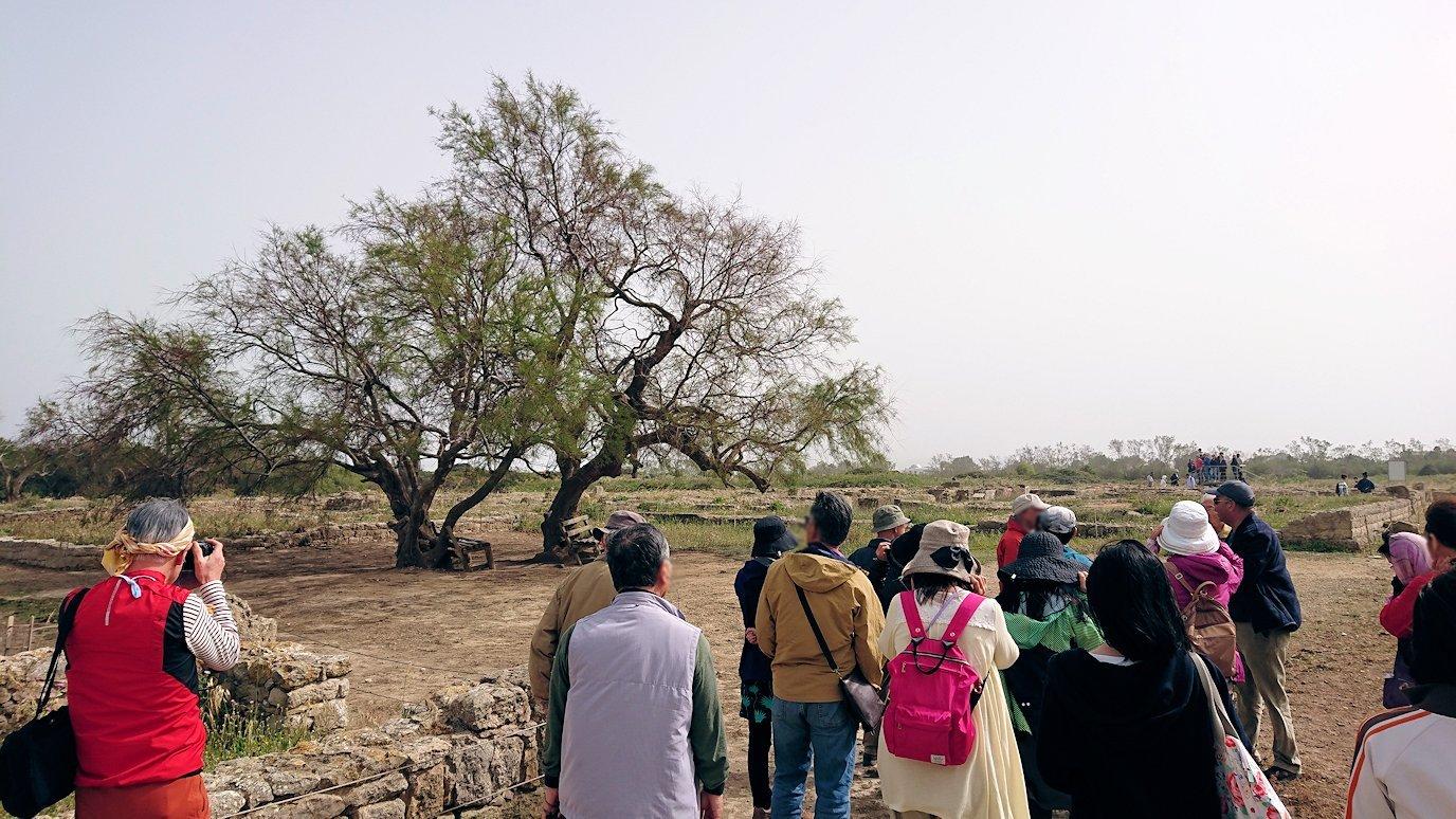 チュニジア:のケルクアン遺跡内を散策する9