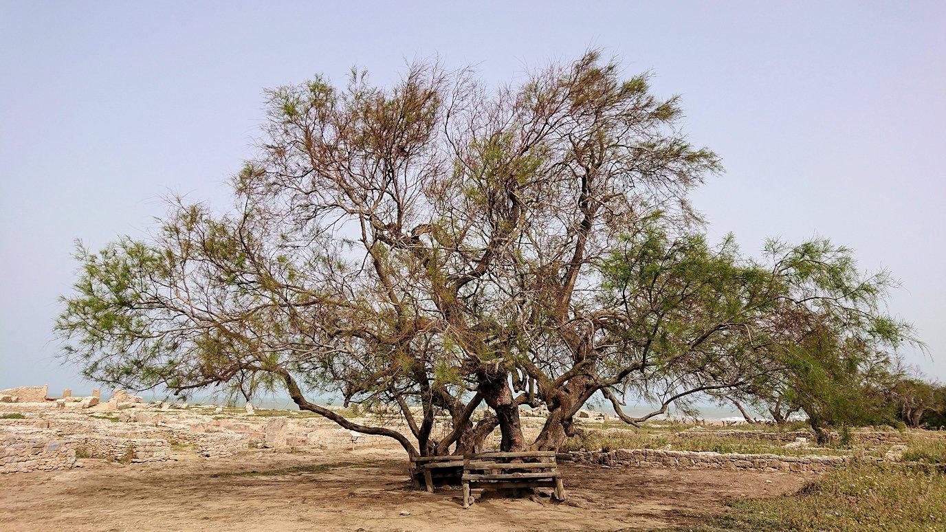 チュニジア:のケルクアン遺跡で見かけたものは?3