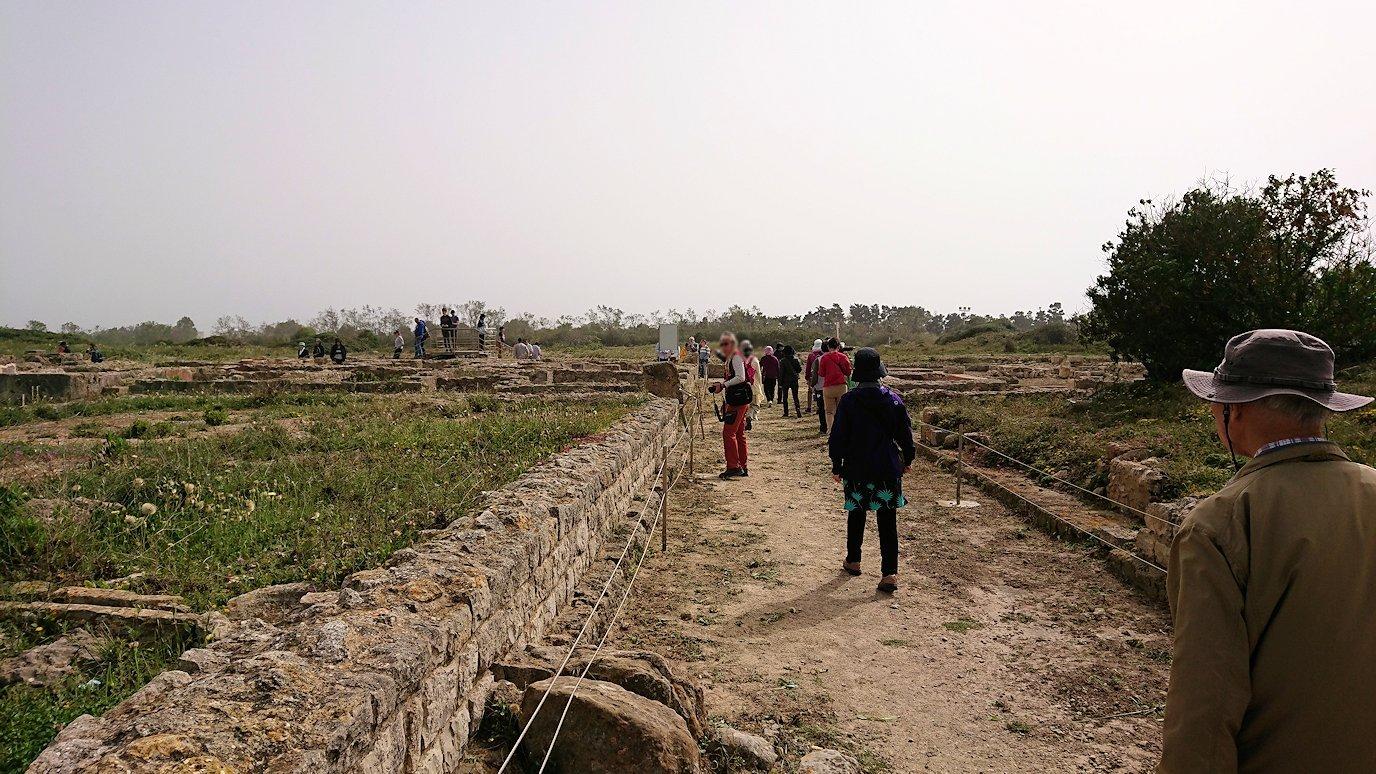 チュニジア:のケルクアン遺跡で見かけたものは?4