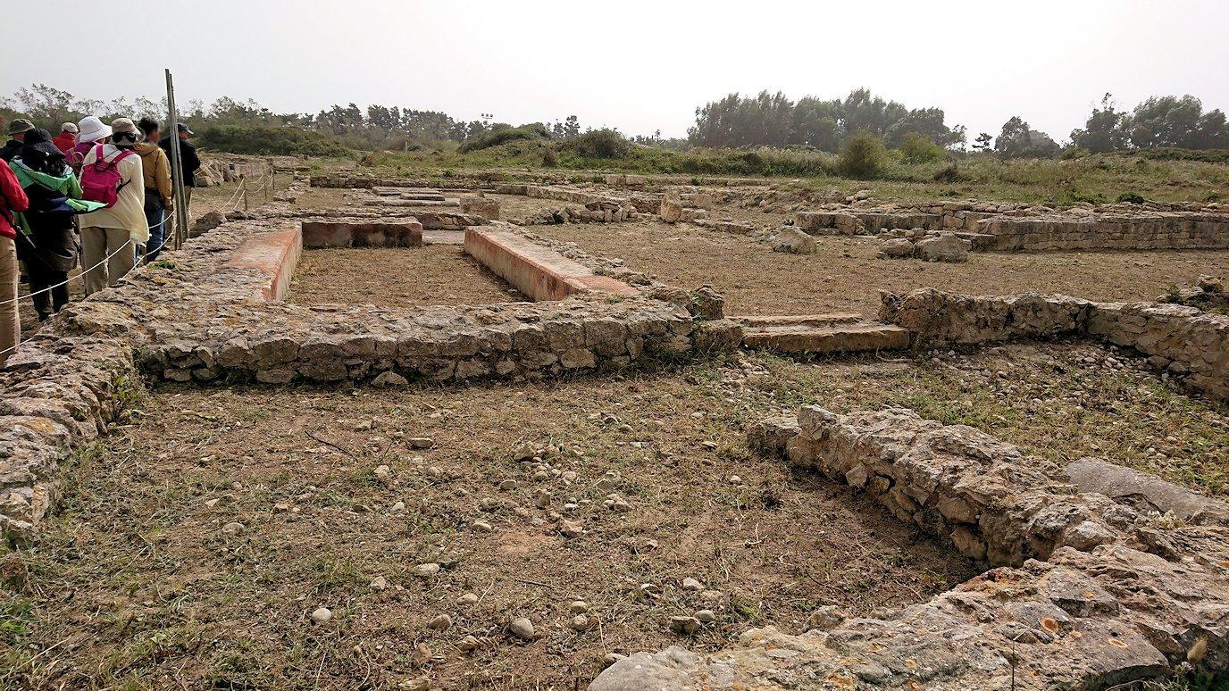 チュニジア:のケルクアン遺跡で見かけたものは?5