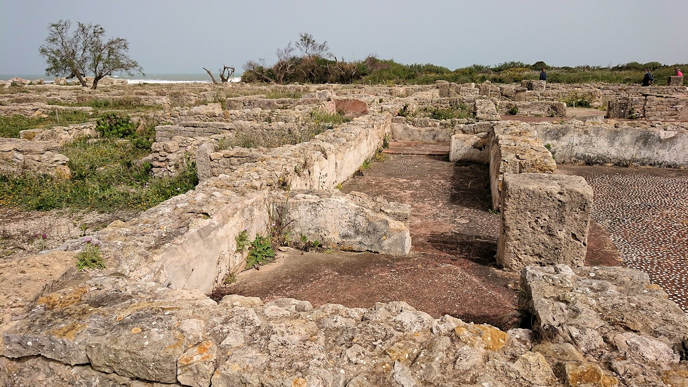 チュニジア:のケルクアン遺跡で見かけたものは?8