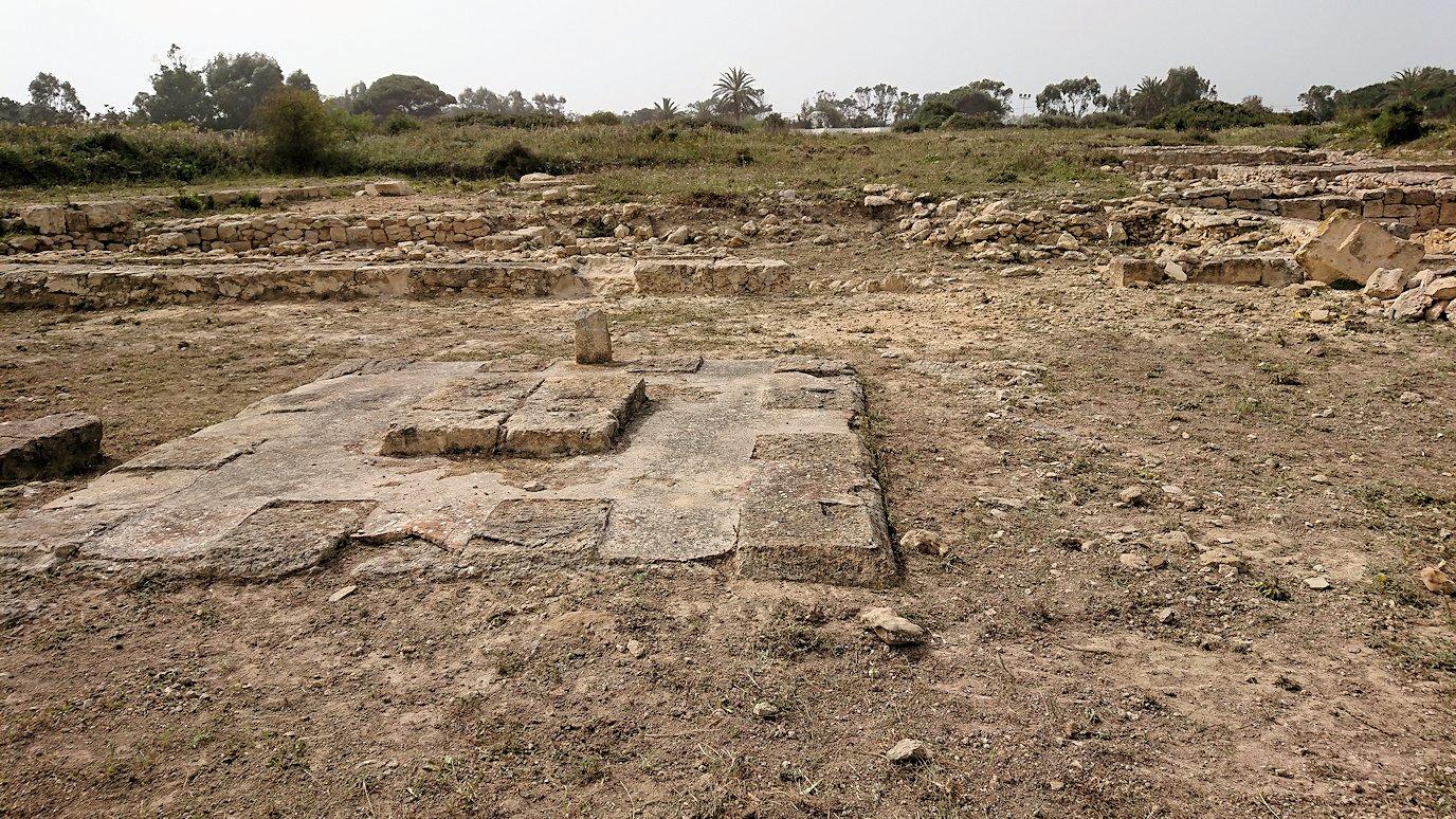 チュニジア:のケルクアン遺跡で見かけたものは?9