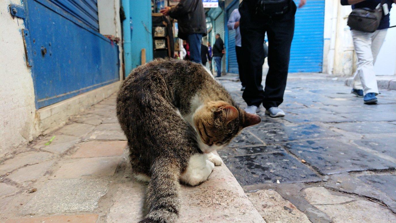 チュニジア:チュニスのメディナのメイン通りを進む3