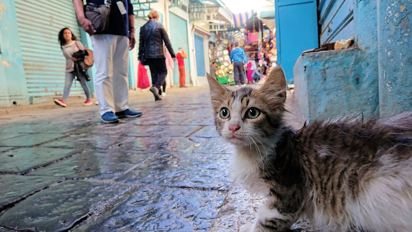 チュニジア:チュニスのメディナのメイン通りを進みながらグランドモスクに1