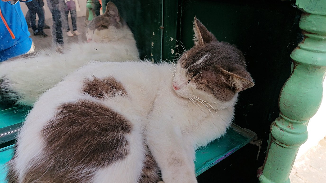 チュニジア:チュニスのメディナのメイン通りを進みながらグランドモスク近くの猫ちゃん