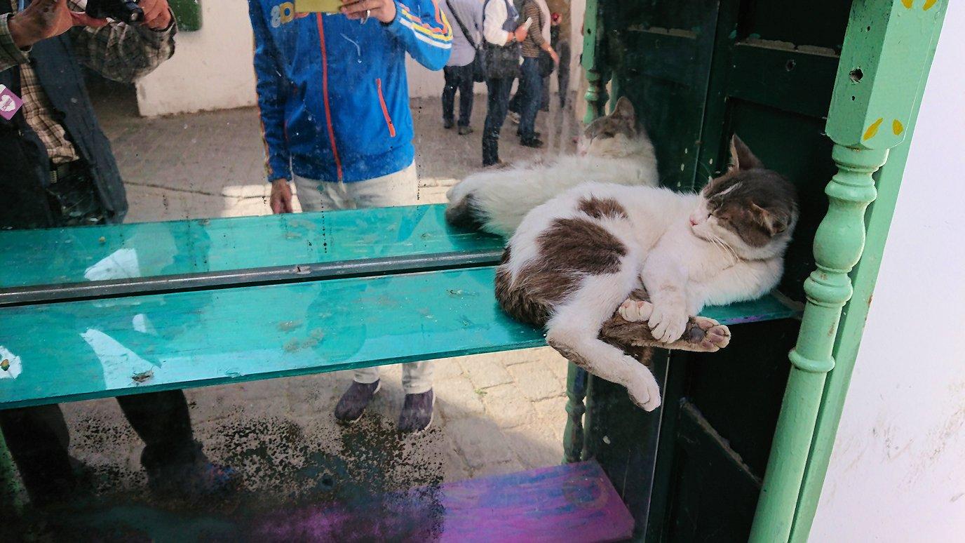 チュニジア:チュニスのメディナのメイン通りを進みながらグランドモスク近くの猫ちゃん1