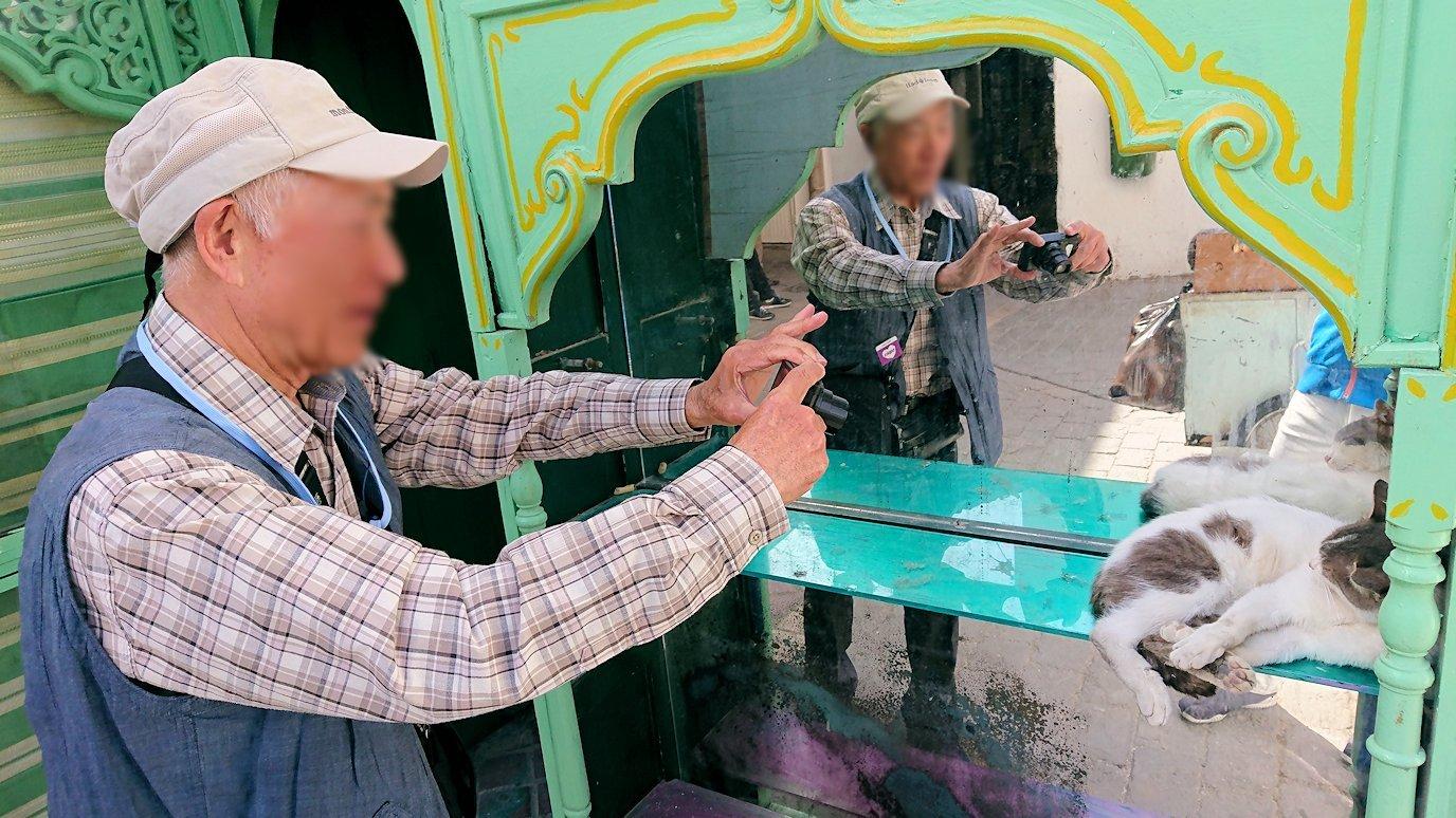 チュニジア:チュニスのメディナのメイン通りを進みながらグランドモスク近くの猫ちゃん2