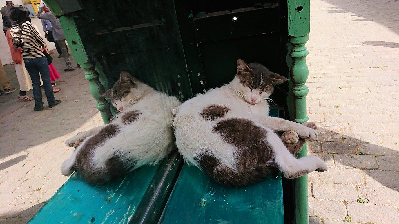 チュニジア:チュニスのメディナのメイン通りを進みながらグランドモスク近くの猫ちゃん3