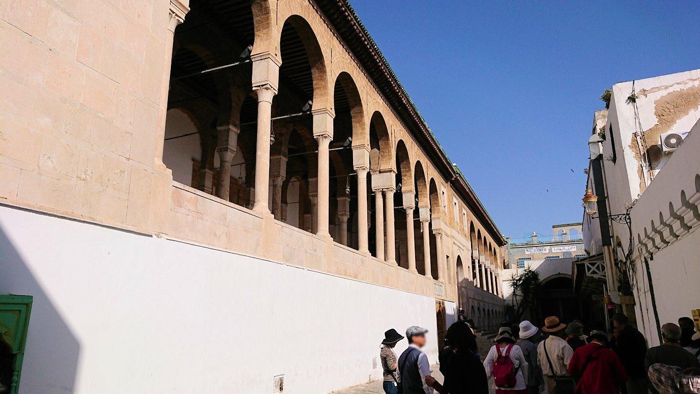 チュニジア:チュニスのメディナのメイン通りを進みながらグランドモスク近くの猫ちゃん6