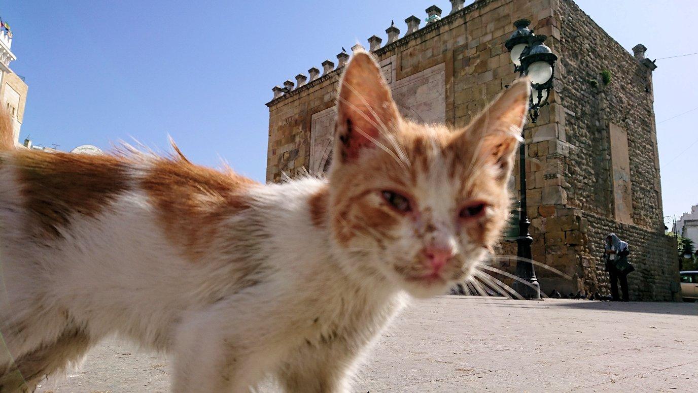 チュニジア:チュニスのメディナの猫ちゃんは・・6