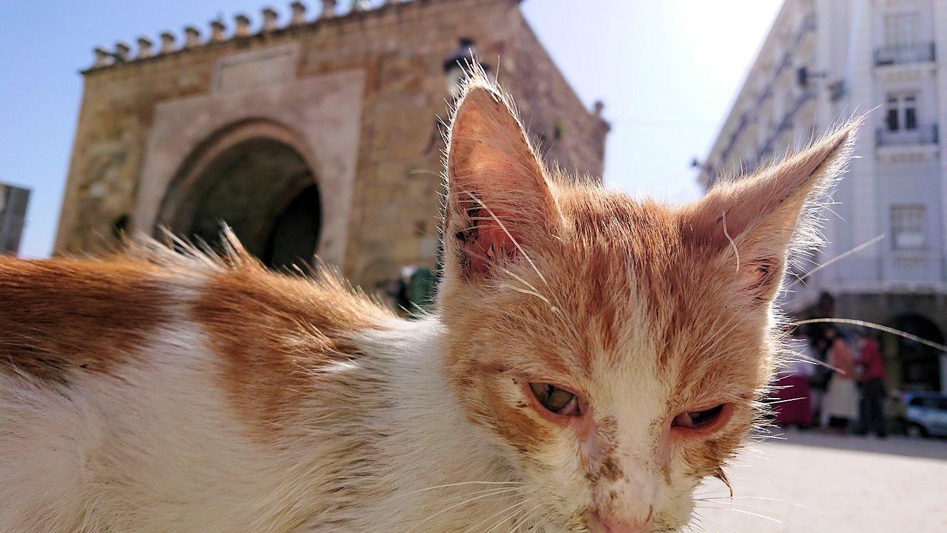 チュニジア:チュニスのメディナの猫ちゃんは・・7