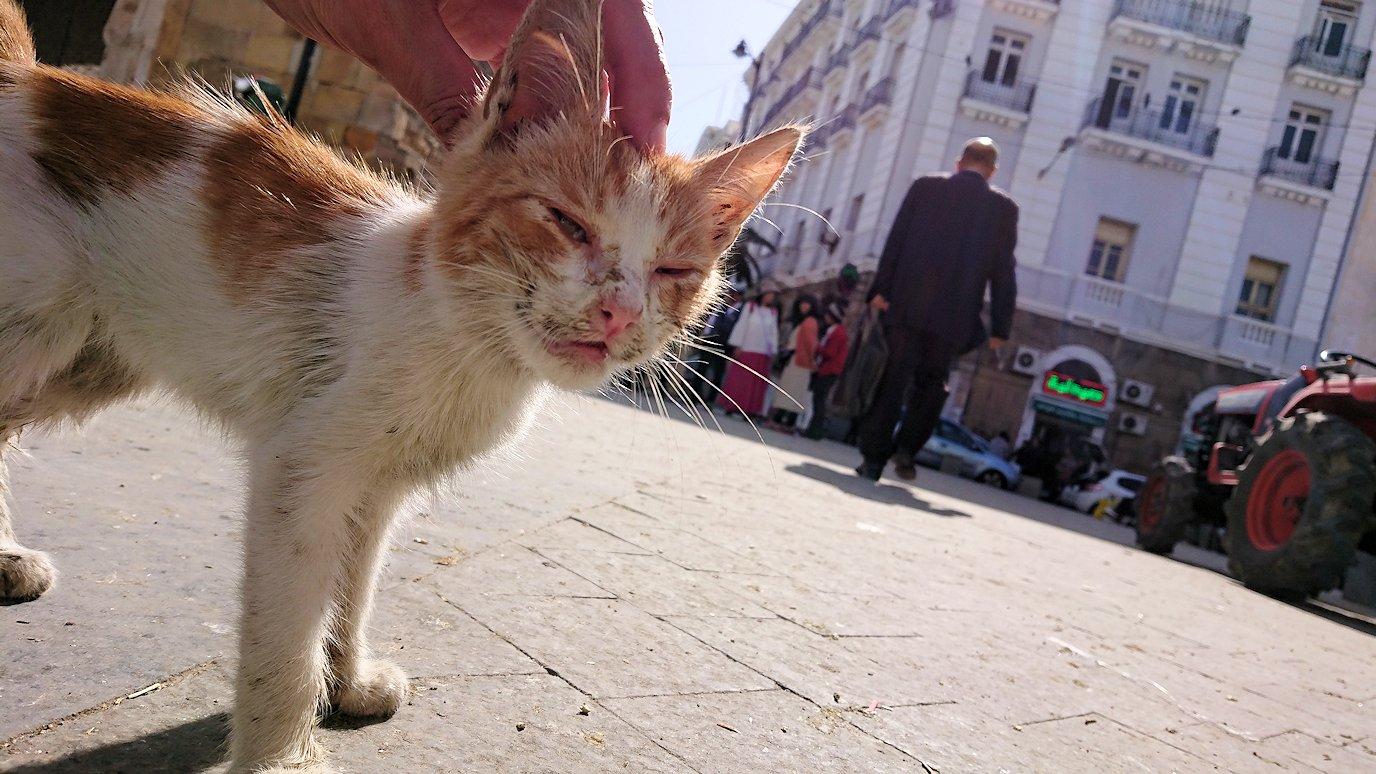 チュニジア:チュニスのメディナの猫ちゃんは・・9