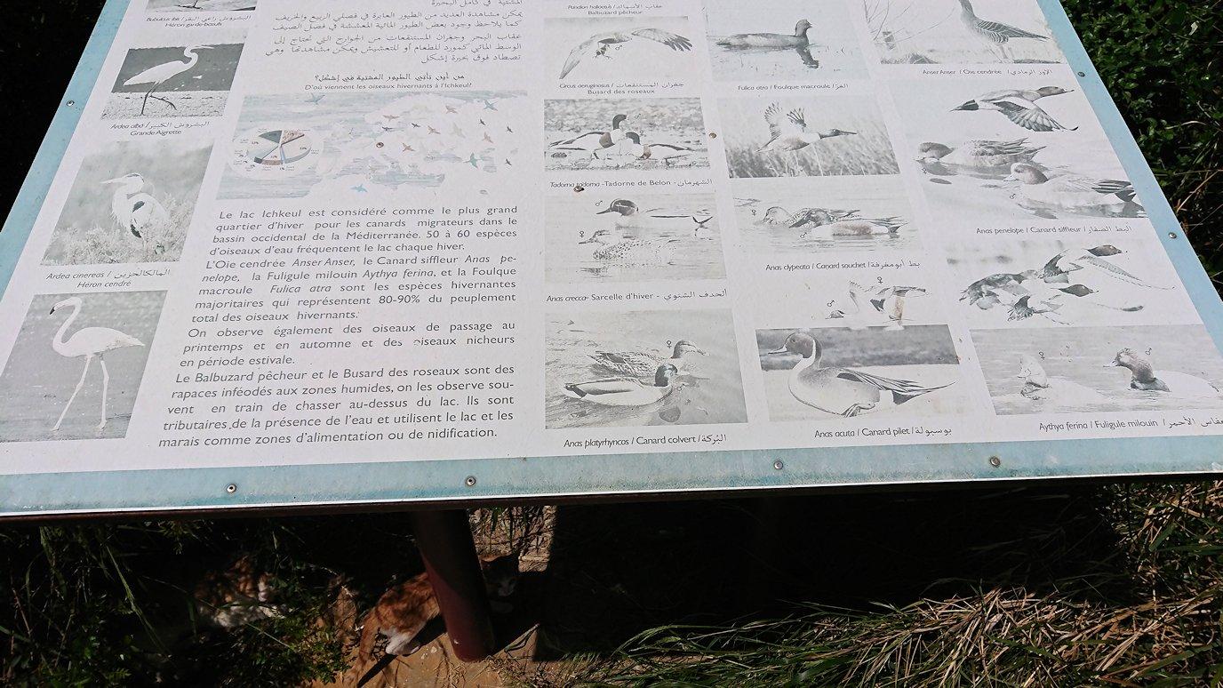 チュニジア:イシュケウル国立公園の階段を登ってなんとか頂上に辿り着く6