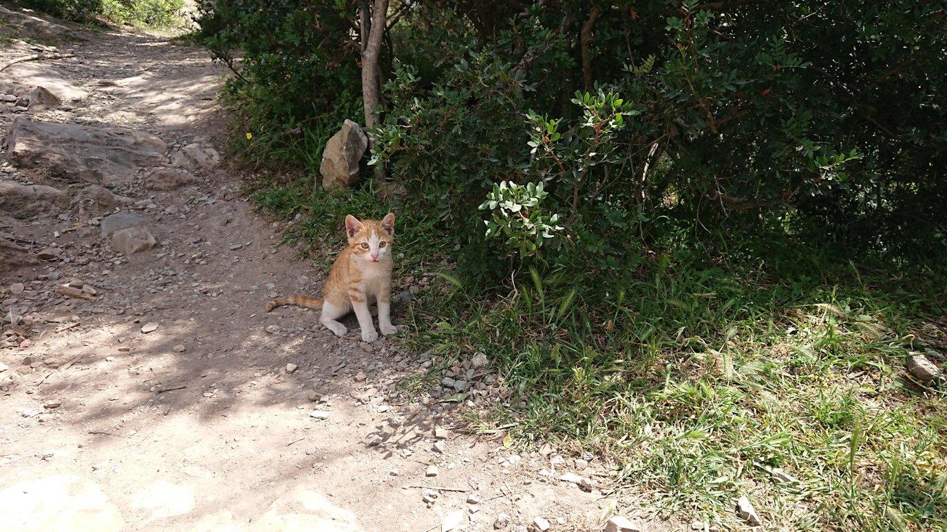 チュニジア:イシュケウル国立公園の頂上で休憩3