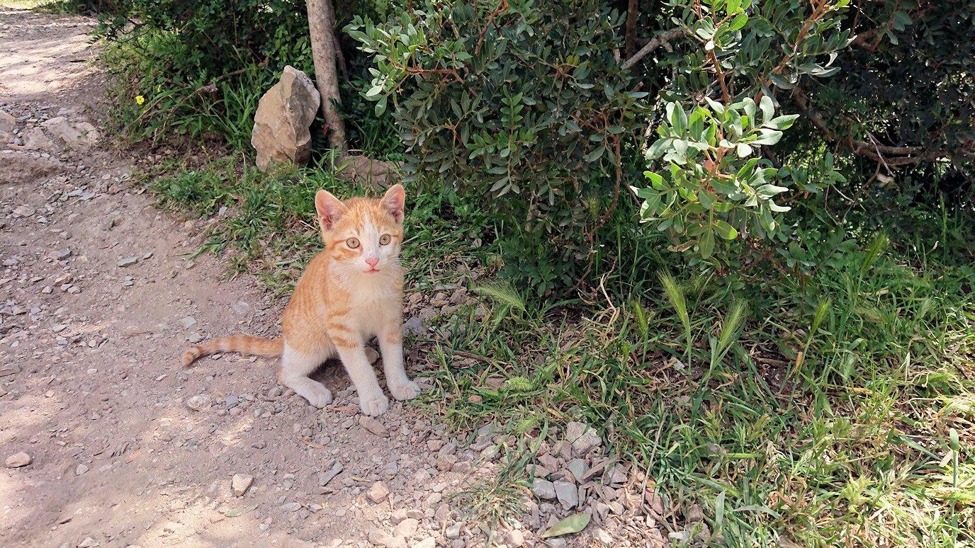 チュニジア:イシュケウル国立公園の頂上で休憩4