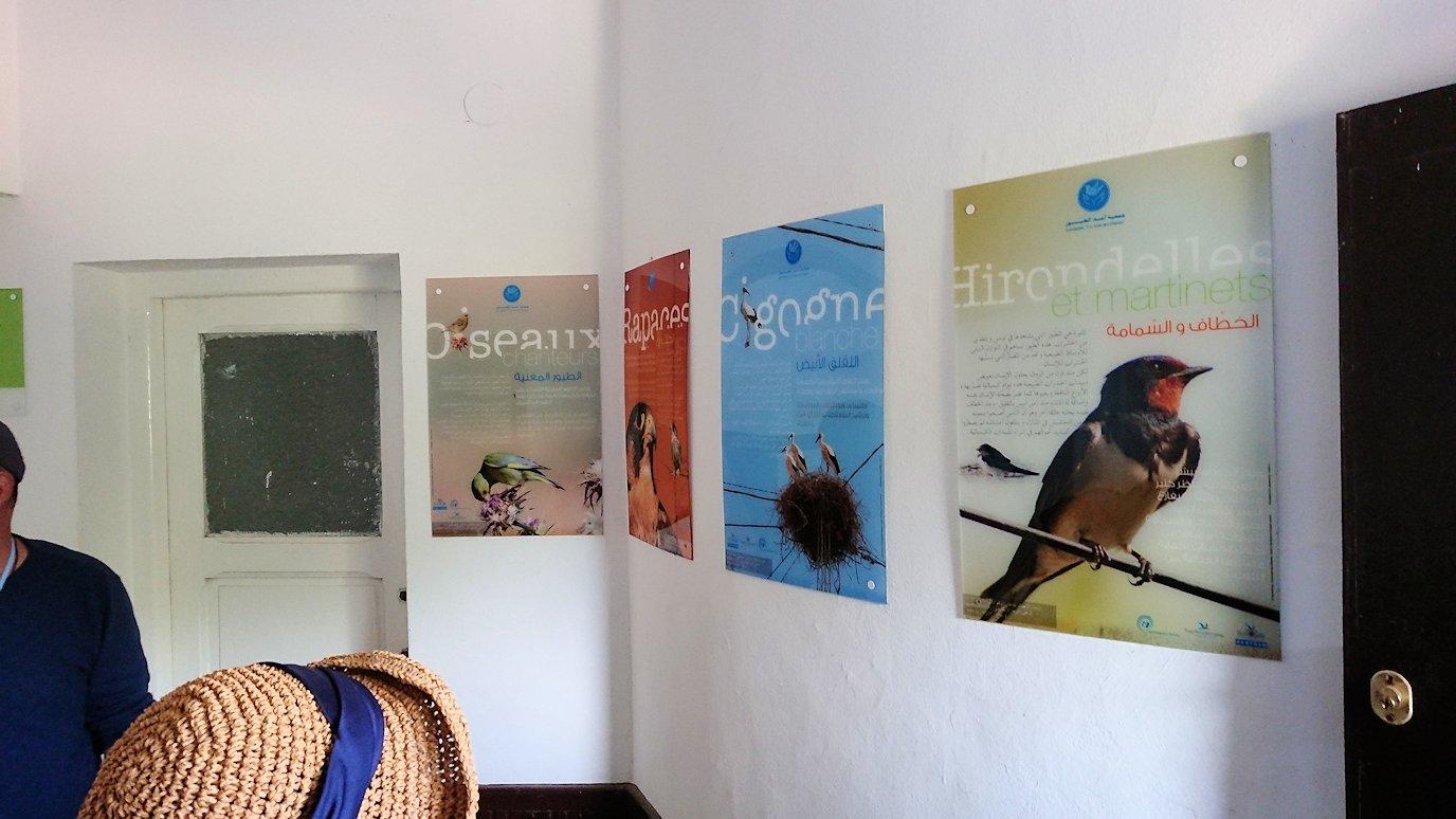 チュニジア:イシュケウル国立公園の頂上の自然博物館にて4