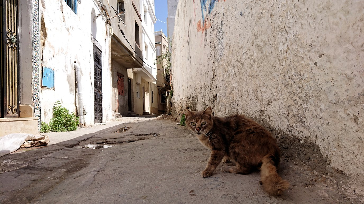 チュニジア:ビゼルトの街で見かけた猫8