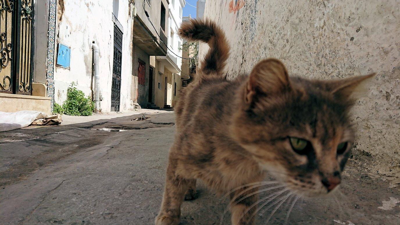チュニジア:ビゼルトの街で見かけた猫9