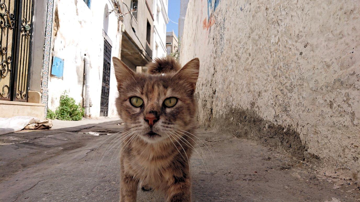 チュニジア:ビゼルトの街で見かけた猫と遊ぶ