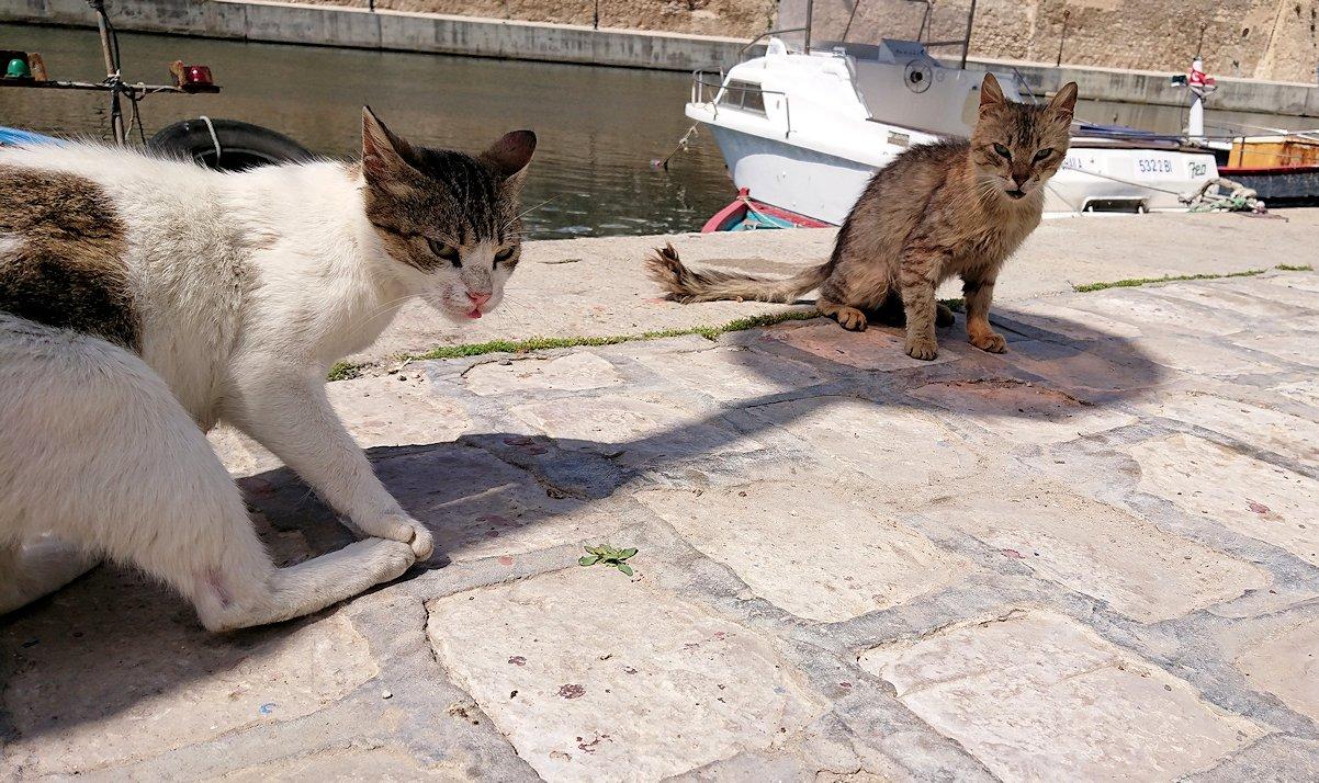 チュニジア:ビゼルトの街で見かけた猫と遊ぶ6