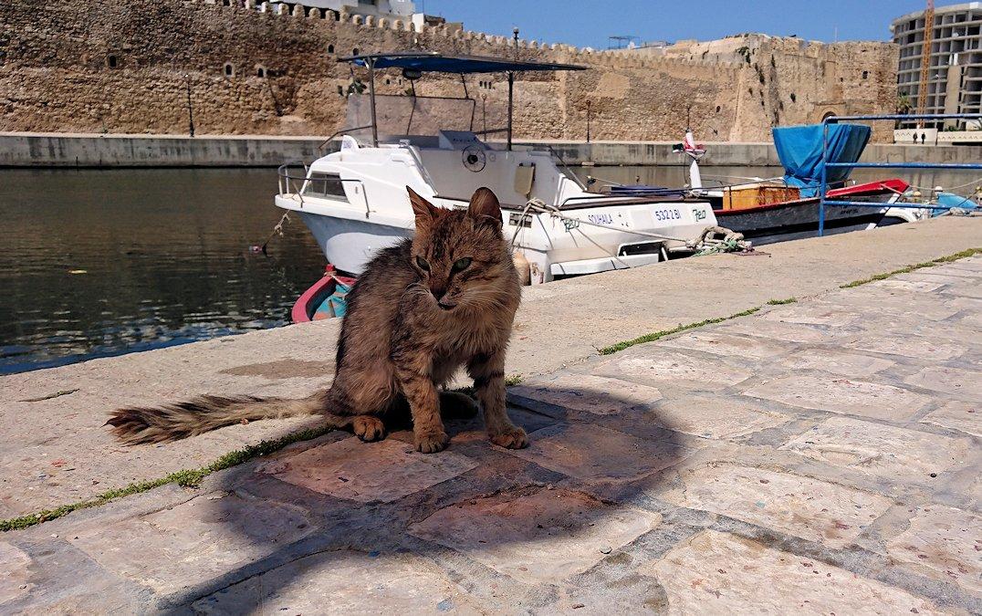 チュニジア:ビゼルトの街で見かけた猫と遊ぶ7