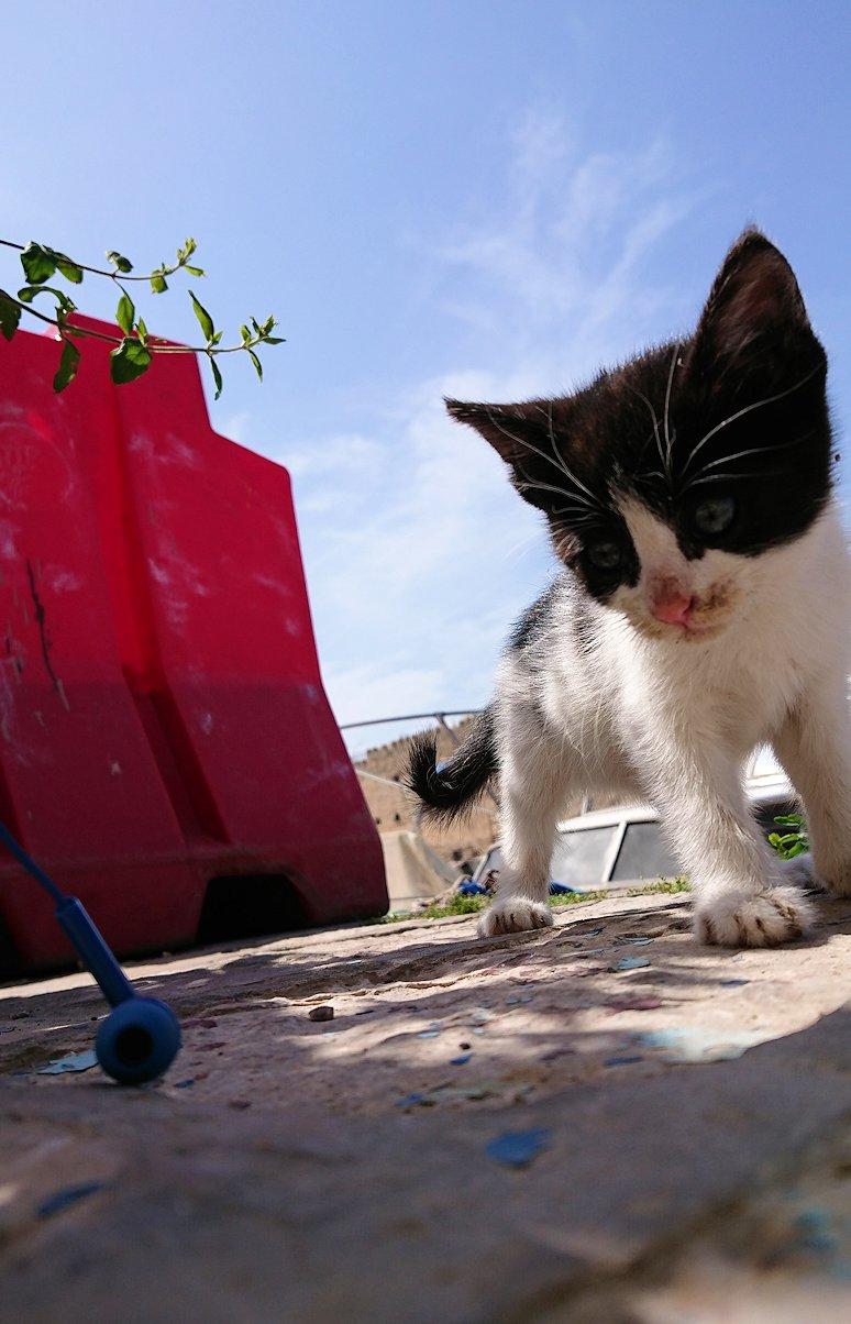 チュニジア:ビゼルトの街の猫とたわむれる1