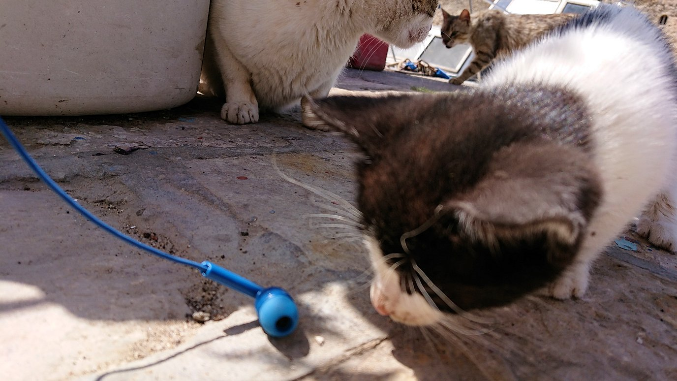 チュニジア:ビゼルトの街の猫とたわむれる2
