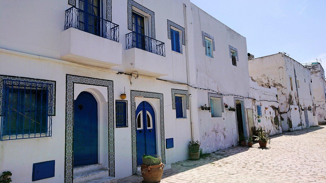 チュニジア:ビゼルトの街の猫とたわむれる4