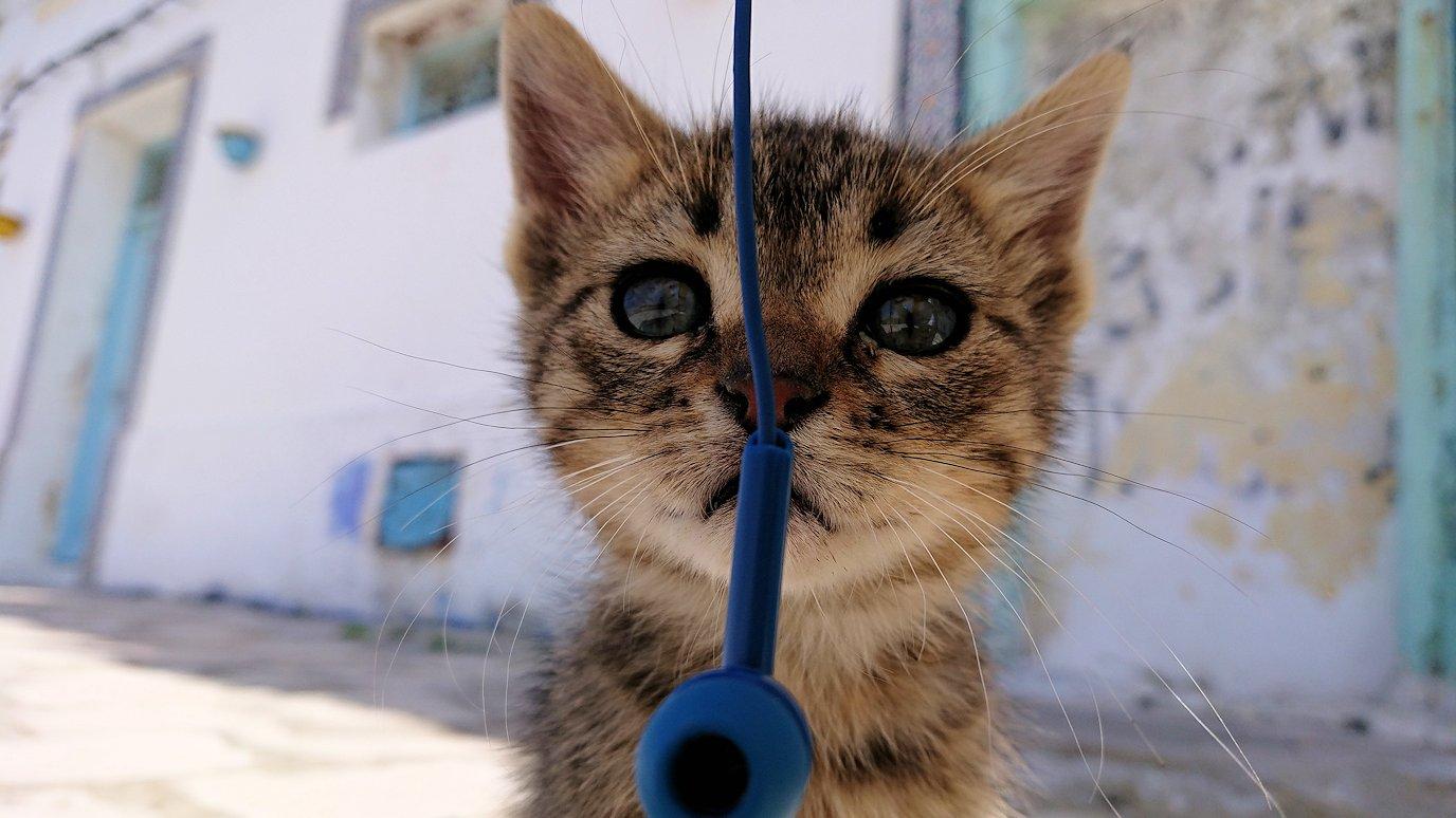 チュニジア:ビゼルトの街の猫とたわむれる7