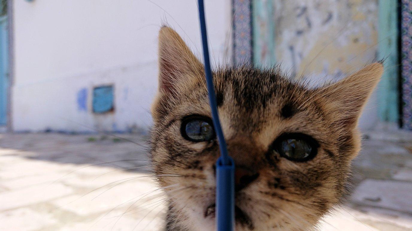 チュニジア:ビゼルトの街の猫とたわむれる8