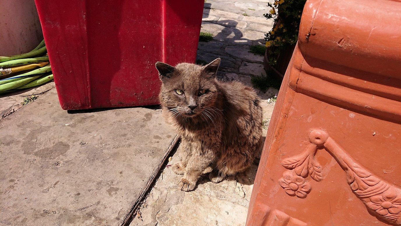 チュニジア:ビゼルトの街で旧港付近を回る7