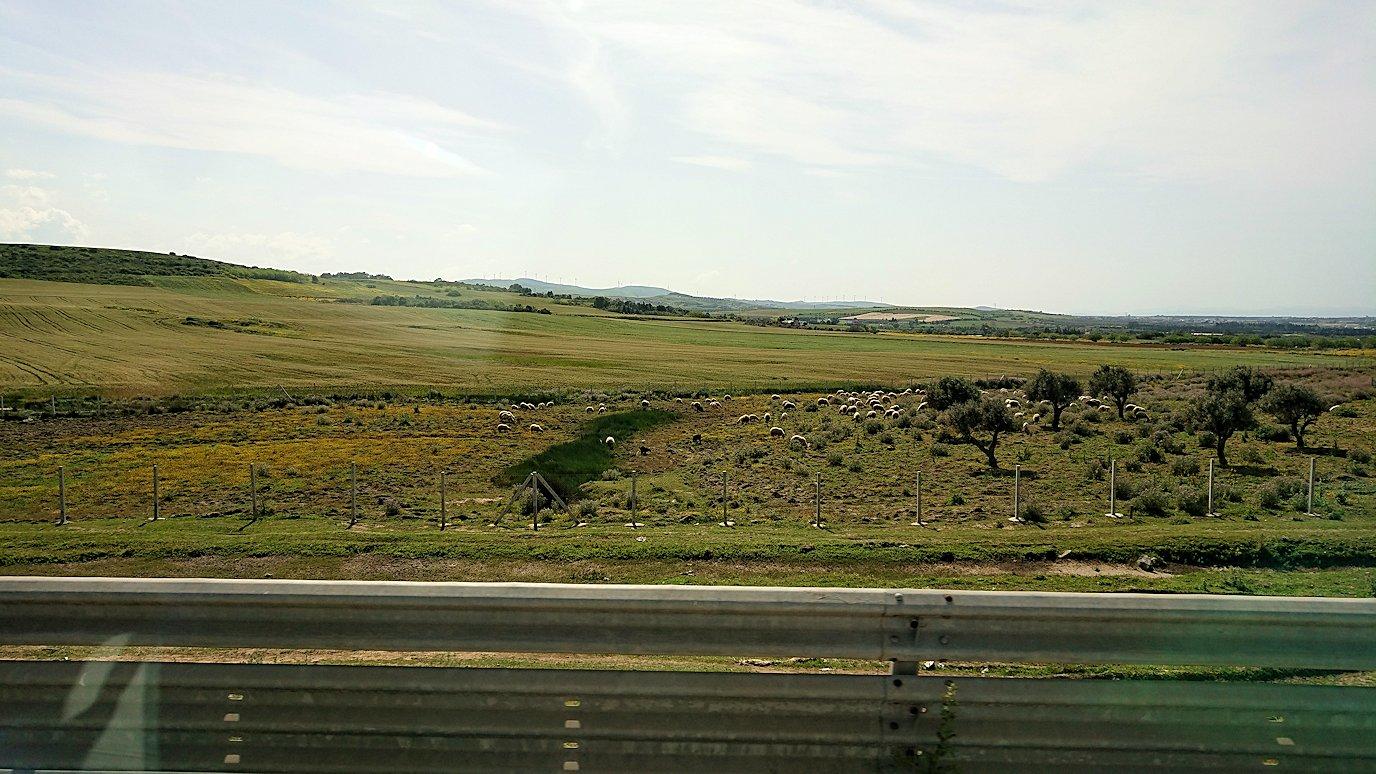 チュニジア:ビゼルトからシディ・ブ・サイドに向かう道中の景色4