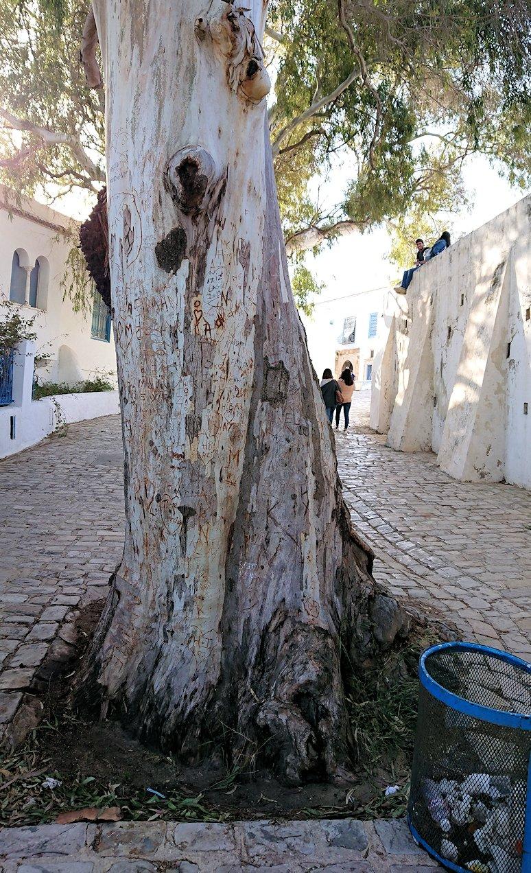 チュニジア:シディ・ブ・サイドで絶景のカフェにて5
