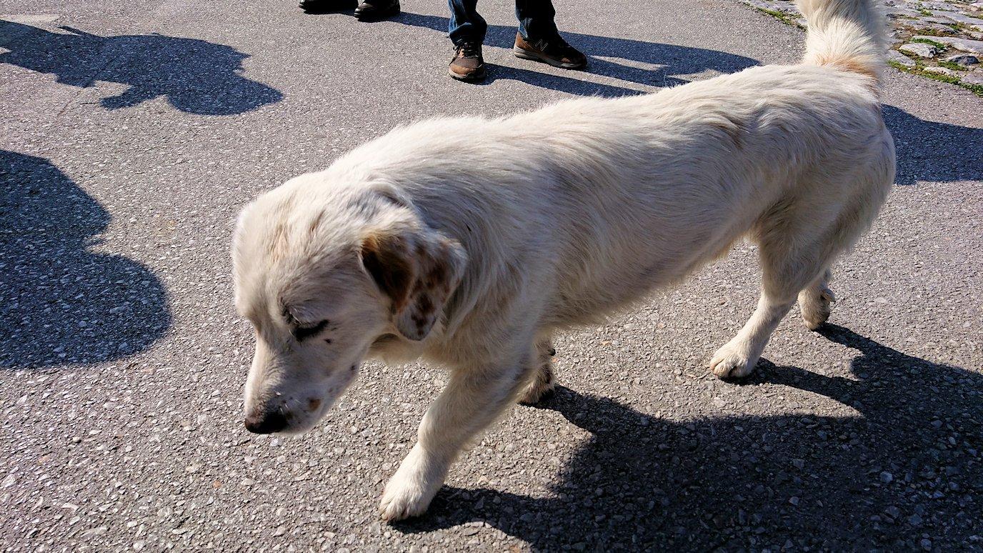 北マケドニアのオフリド湖遊覧終了しオフリドの街の港にて犬と戯れる9
