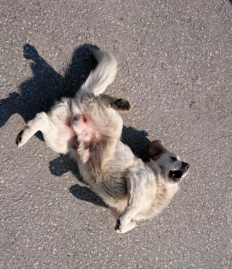 北マケドニアのオフリド湖遊覧終了しオフリドの街の港にて犬と戯れる1