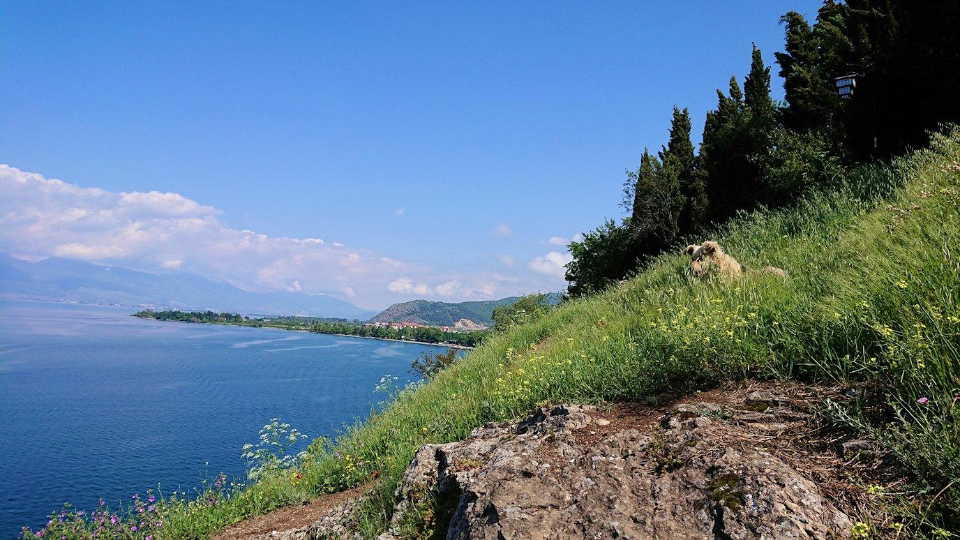 北マケドニアのオフリドで聖ヨハネ・カネオ教会付近ではしゃぐワンちゃん