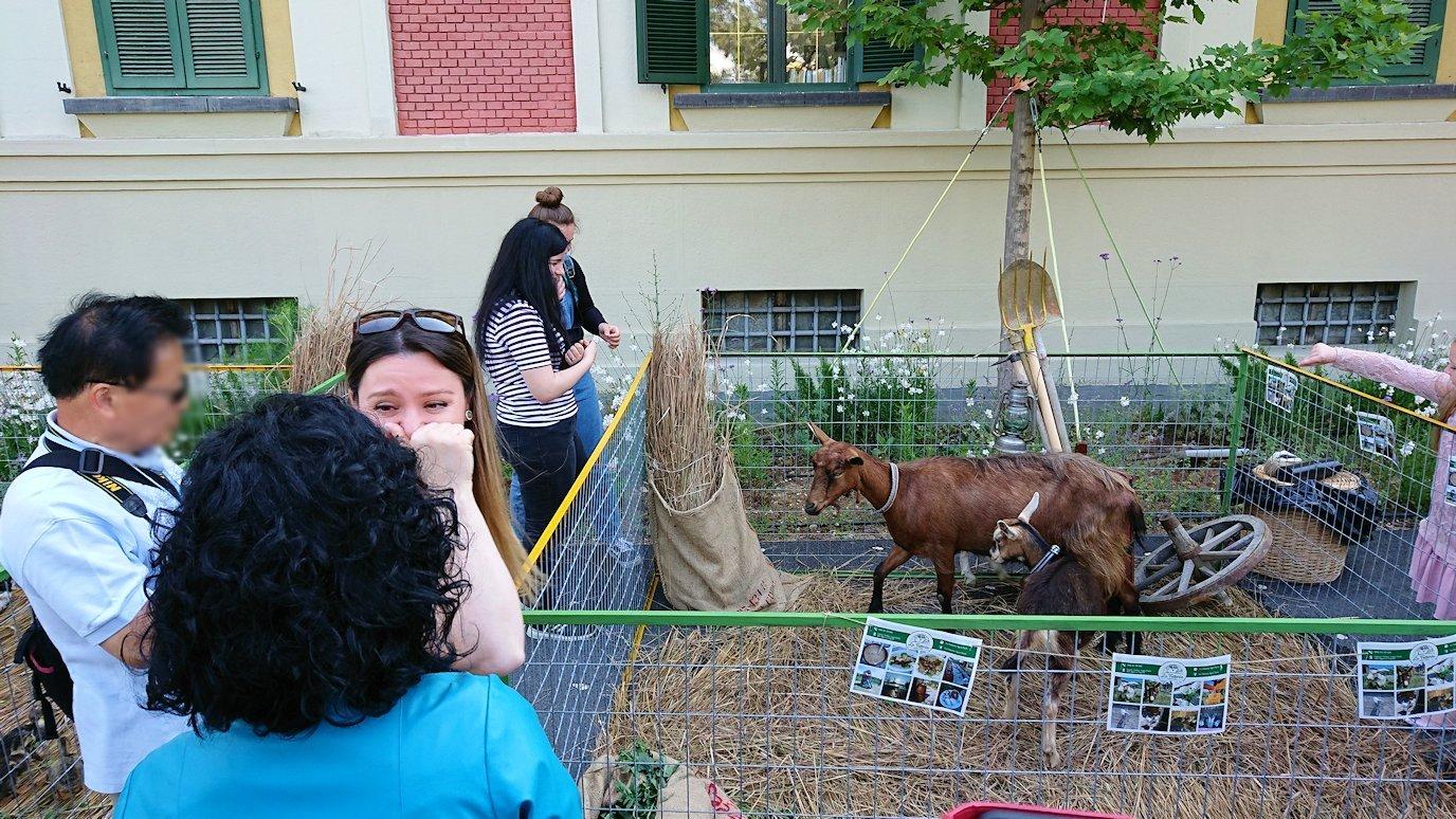 アルバニアで首都ティラナのスカンデルベグ広場で動物を見かける2