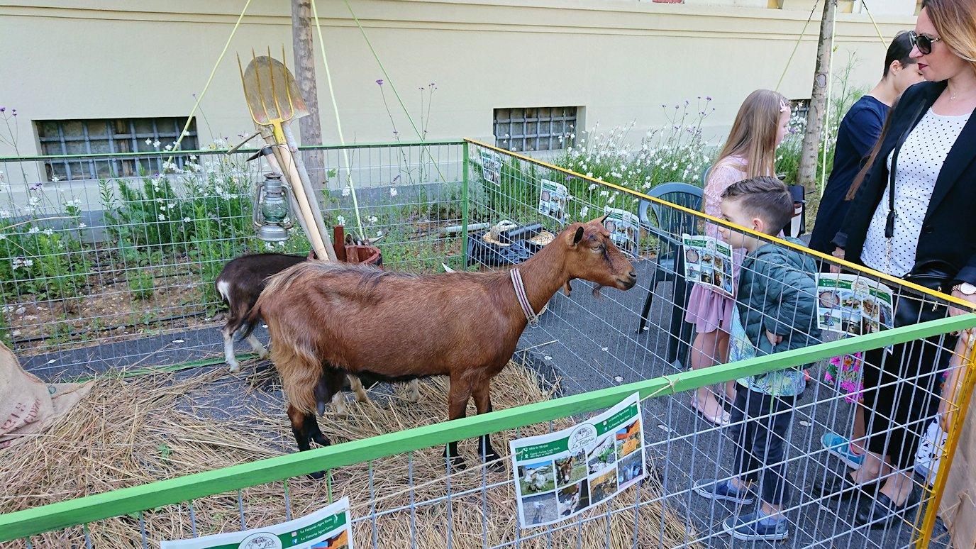 アルバニアで首都ティラナのスカンデルベグ広場で動物を見かける4