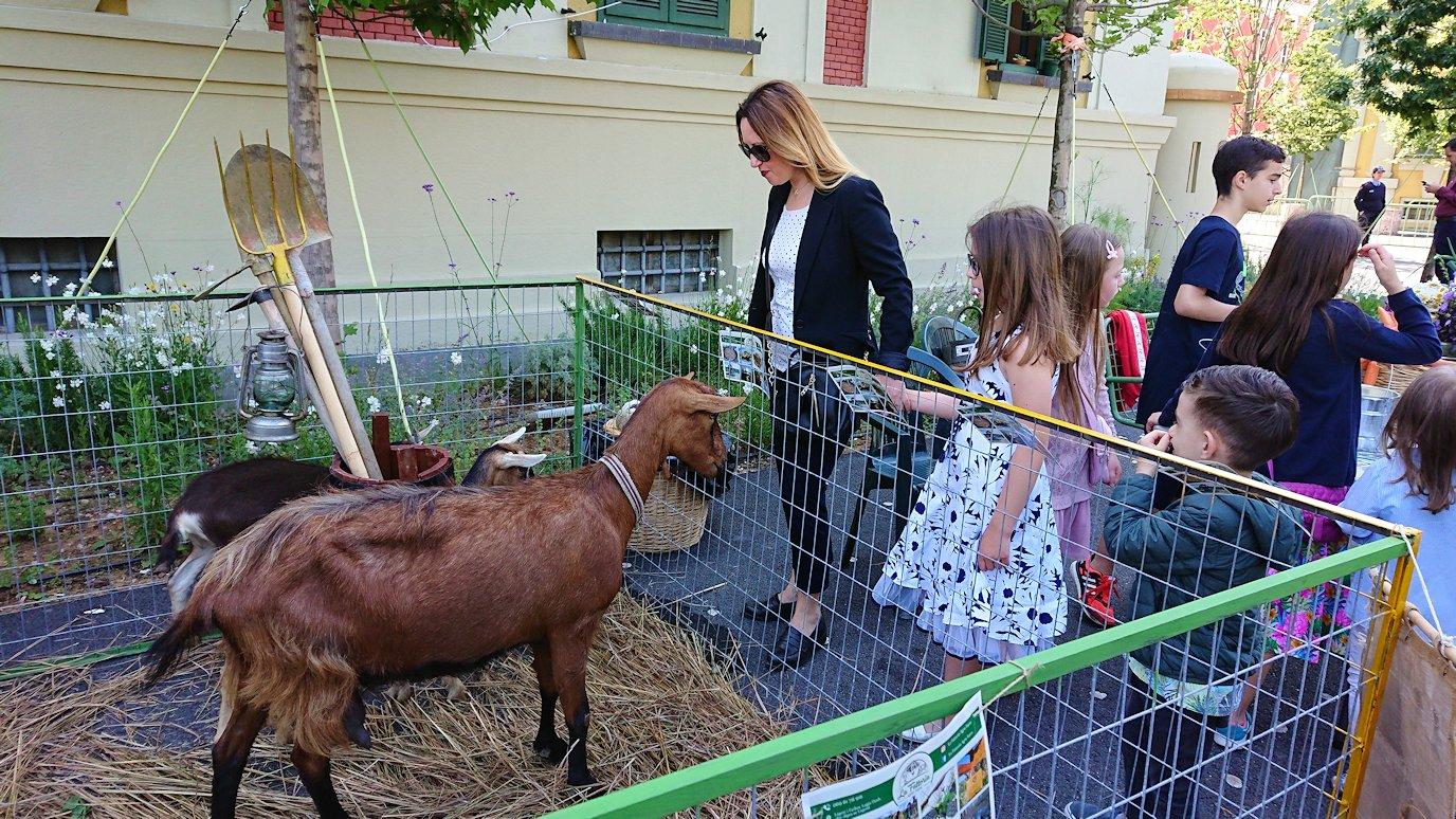 アルバニアで首都ティラナのスカンデルベグ広場で動物を見かける5