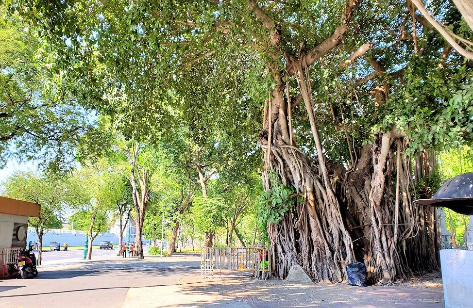 ワット・ポー敷地外にあった菩提樹