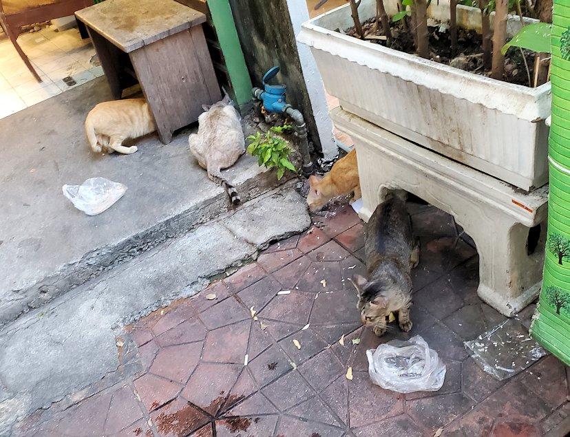 夕暮れ時のカオサン通りを満喫していると見かけた猫ちゃん