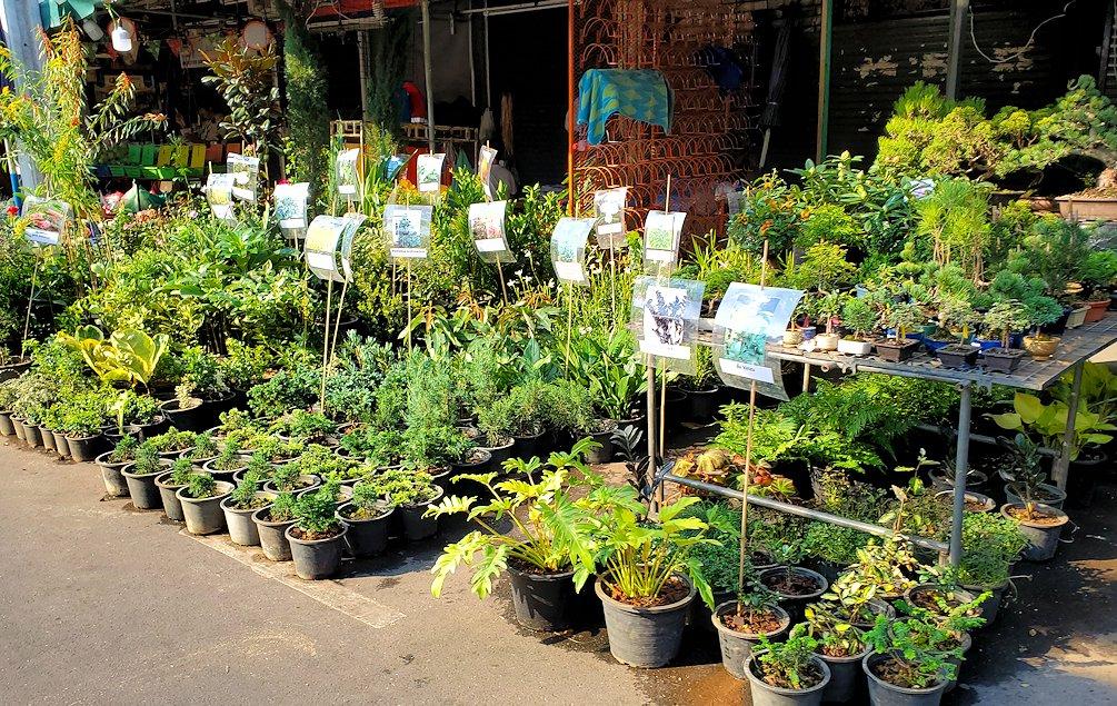 チャトゥチャック・ウィークエンドマーケット内で販売されている植物