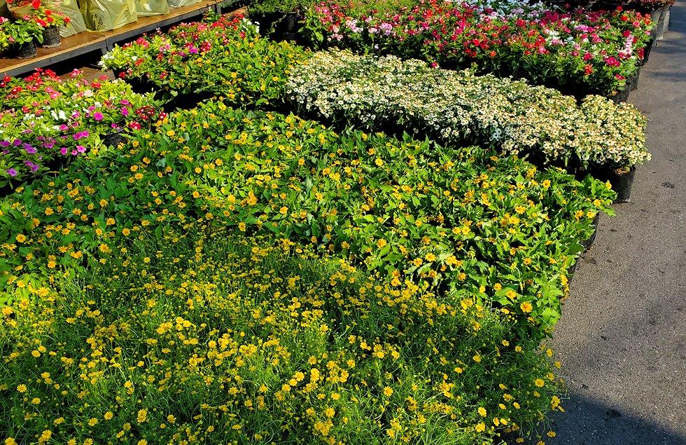 チャトゥチャック・ウィークエンドマーケット内で販売されている植物-2