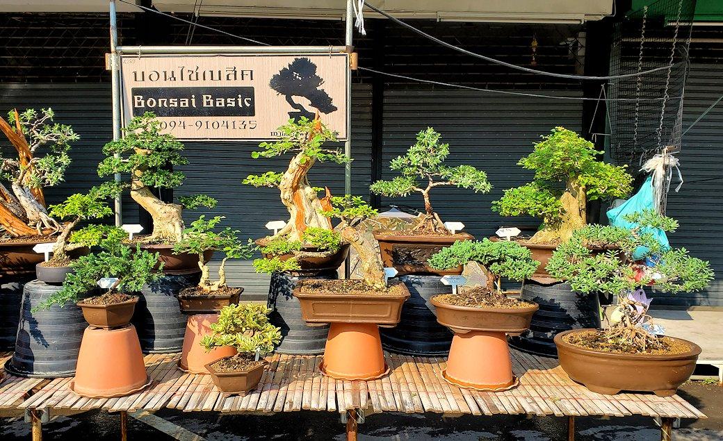 チャトゥチャック・ウィークエンドマーケット内で売られていた盆栽