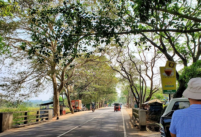 アヌラーダプラまで移動する途中に訪れた休憩所前の道路