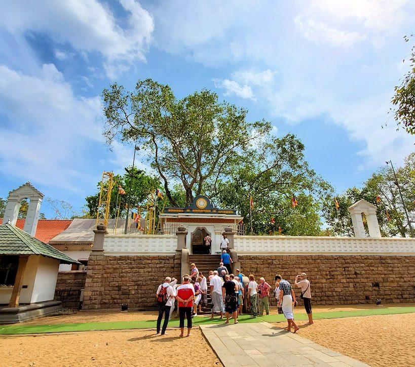 スリー・マハー菩提樹を正面から見る