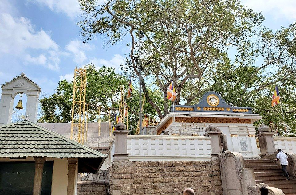 スリー・マハー菩提樹を正面から見る-2