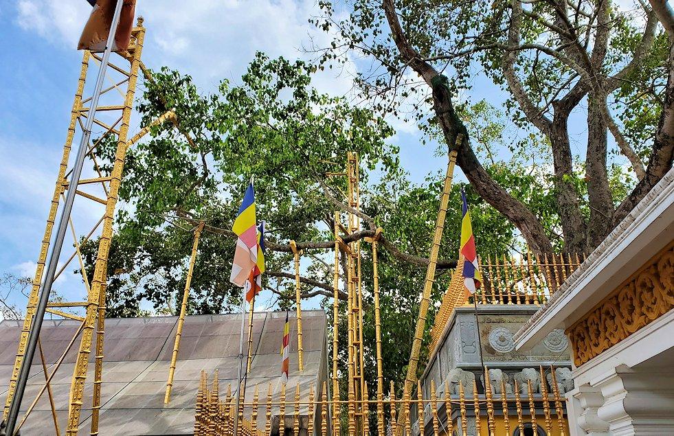 祀られているスリー・マハー菩提樹は、このように支えだらけ