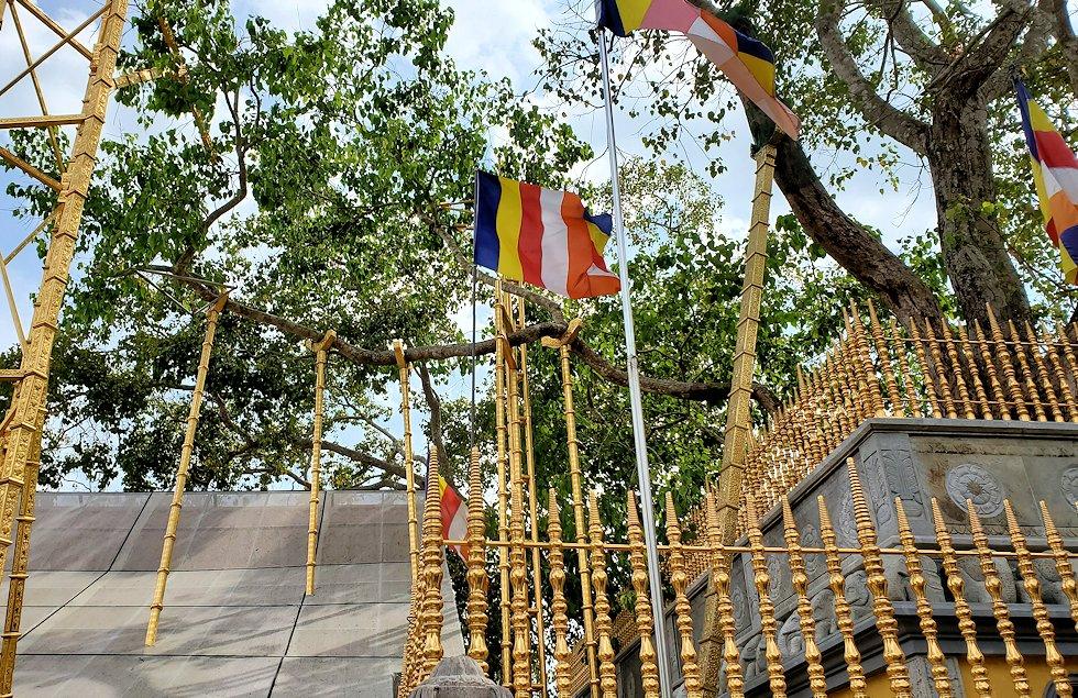 お釈迦様が悟りを開いた菩提樹の分木であるスリー・マハー菩提樹