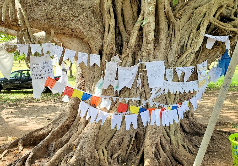 ルワンウェリ・サーヤ大塔に続く道に生えているガジュマルの木
